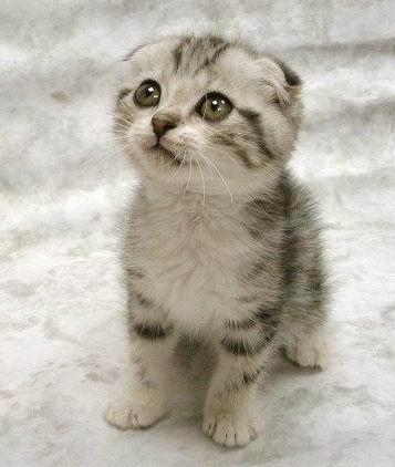 A_aaa-Cute-Cat-3.jpg