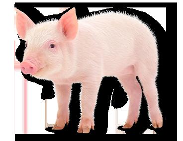 header-cerdos.png